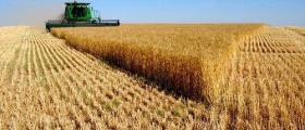 Производство на зърнени култури в Търговище