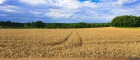 Производство на зърнени растения Силистра