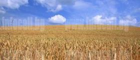 Производство селскостопанска продукция в Езерче-Цар Калоян