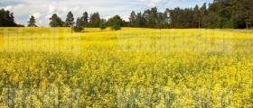 Производство селскостопанска продукция в Лозно-Кюстендил