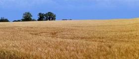 Производство селскостопанска продукция в Миндя-Велико Търново