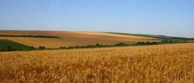 Производство селскостопанска продукция в Завет и Разград