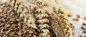 Производство зърнени култури в Нови Пазар