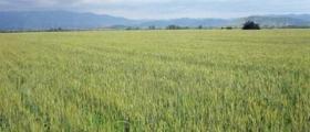 Растениевъдство и животновъдство в Чернолик-Силистра