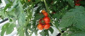 Растениевъдство в град Мездра