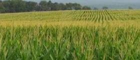 Растениевъдство в община Макреш