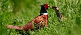 Развъждане на дивеч в Рашково-Ботевград