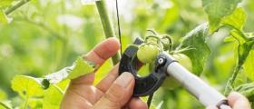 Реализация на селскостопанска продукция в Долни Дъбник
