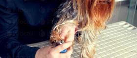 Рязане на нокти на домашни любимци във Варна