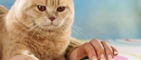 Рязане нокти на котки във Варна