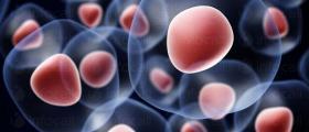 Съхранение на стволови клетки в София-Овча купел - РепроБиоМед ООД
