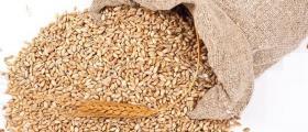Съхранение на зърно в Област Плевен