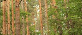 Сертифициране на гори в София