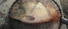 Спортен риболов в Червен бряг