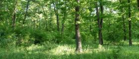 Стопанисване на гори в Смядово-Шумен
