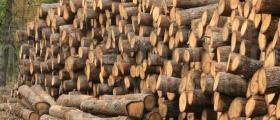 Търговия с дървен материал в Омуртаг - Търговище