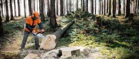 Търговия с дървесина в град Сливен