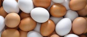 Търговия с яйца Мейбъл и Кармен в област Търговище