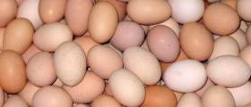 Търговия с яйца Търговище