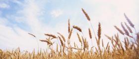 Търговия със селскостопанска продукция Дулово