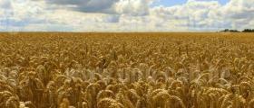 Търговия със селскостопанска продукция в Миндя-Велико Търново