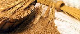 Търговия със селскостопанска продукция в Община Тервел
