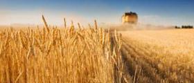 Търговия със селскостопанска продукция в Ставерци-Долна Митрополия