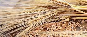 Търговия със селскостопанска продукция Знаменосец-Раднево