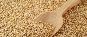 Търговия със зърно във Видин