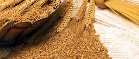 Търговия селскостопанска продукция Тотлебен-Пордим