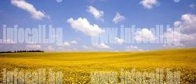 Търговия селскостопанска продукция в Езерче-Цар Калоян