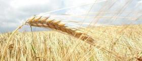 Търговия селскостопанска продукция в Недан-Павликени