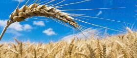 Търговия селскостопанска продукция в Силистра
