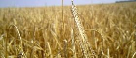 Търговия селскостопанска продукция в Склаве-Сандански