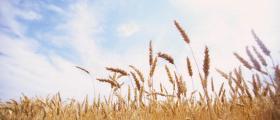 Търговия зърнени култури в Айтос - Бургас