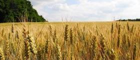 Търговия зърнени култури в Болярово