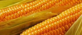 Търговия земеделска продукция в Студено Буче-Монтана