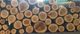 Транспорт дърва, въглища, брикети Плевен - Крис Инвест Холдинг ЕООД
