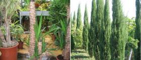 Тревисти, перенни и многогодишни растения в Бургас и Айтос