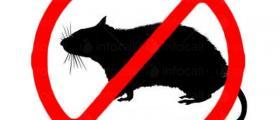 Унищожаване на вредни гризачи във Варна и Шумен