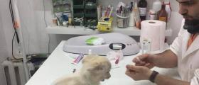 Ветеринарни изследвания София-Люлин - VET STAR Clinic