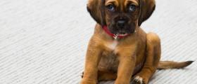 Ветеринарни прегледи в София-Люлин