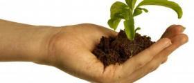 Залесяване на дървесни видове в Смядово-Шумен