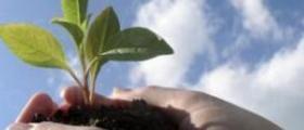 Залесяване в Борино-Смолян