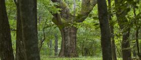 Залесяване в Искър - Самоков