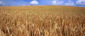 Зърнопреработка в Разград