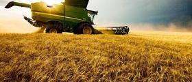 Зърнопроизводство в Долни Дъбник