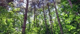 Защита на дървесни видове от вредители