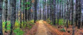 Защита на горските територии