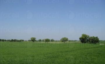 Аренда ( наем ) на земеделски земи в Нови пазар - Виван ЕООД